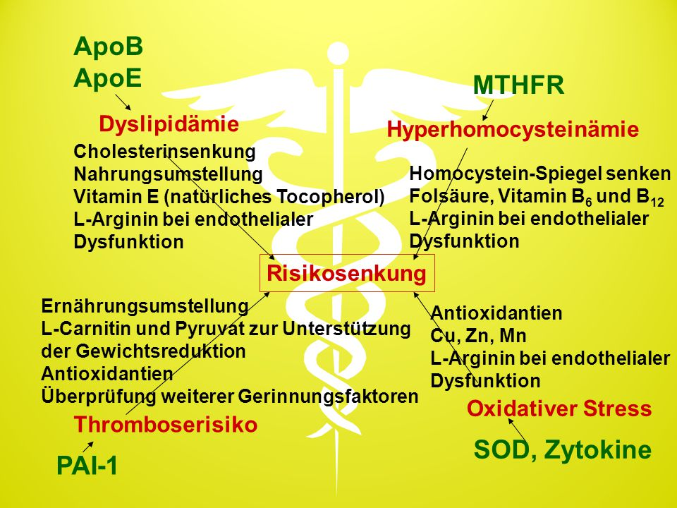 ApoB ApoE MTHFR SOD, Zytokine PAI-1 Dyslipidämie Hyperhomocysteinämie