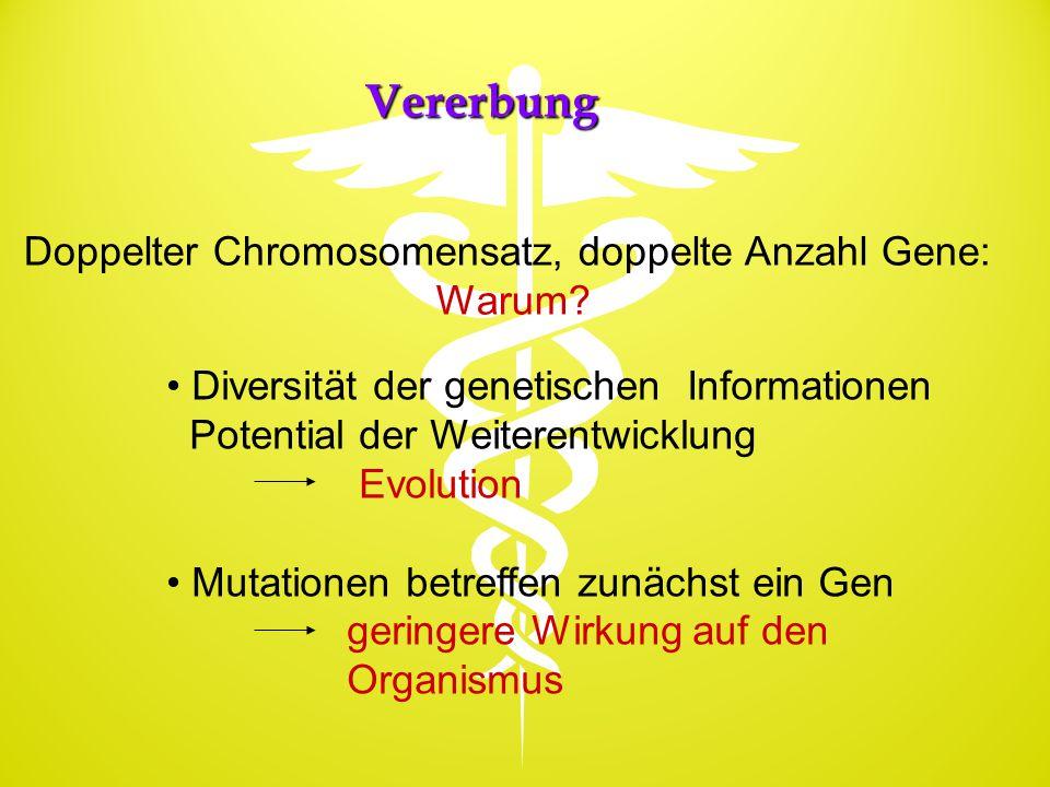 Doppelter Chromosomensatz, doppelte Anzahl Gene: