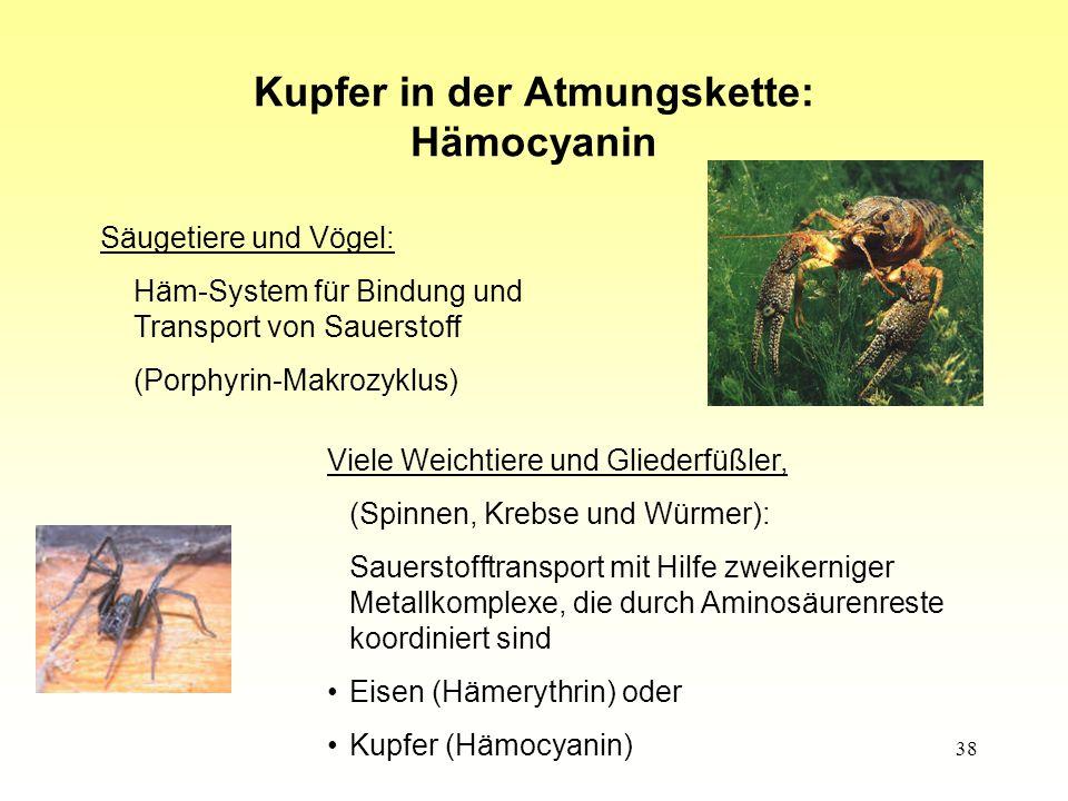 Kupfer in der Atmungskette: Hämocyanin