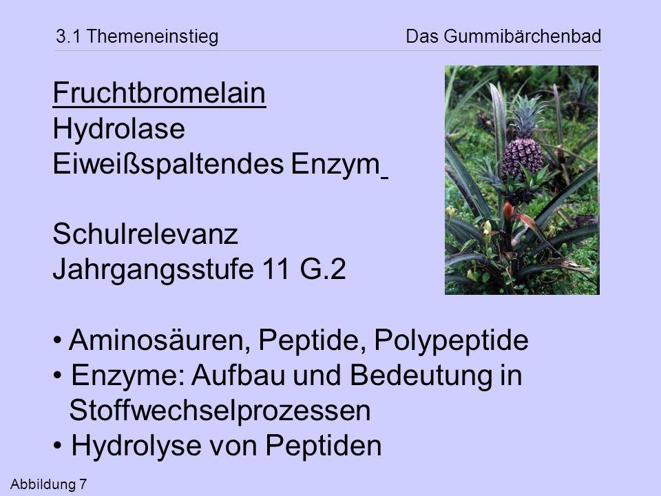 Eiweißspaltendes Enzym Schulrelevanz Jahrgangsstufe 11 G.2