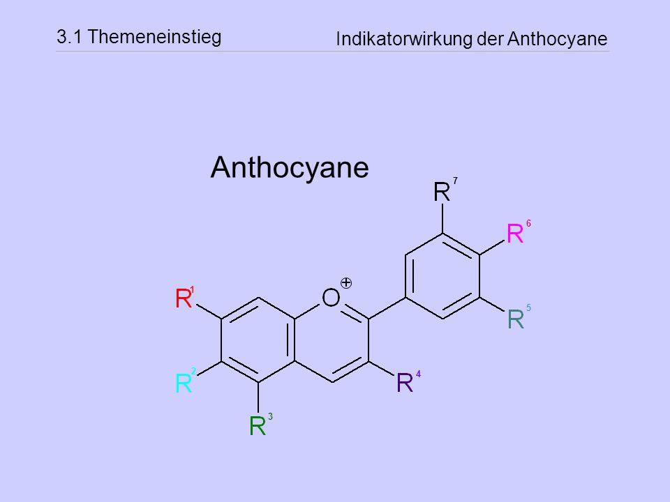 Indikatorwirkung der Anthocyane