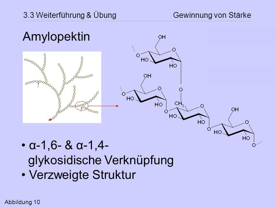 glykosidische Verknüpfung Verzweigte Struktur