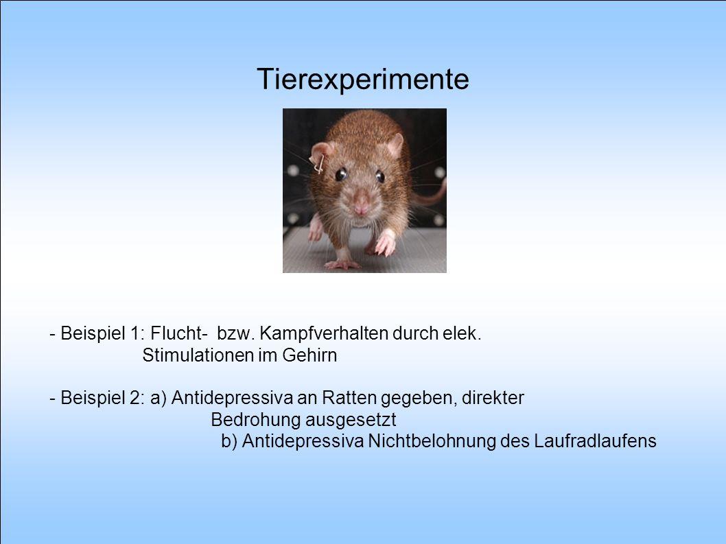 Tierexperimente - Beispiel 1: Flucht- bzw. Kampfverhalten durch elek. Stimulationen im Gehirn.