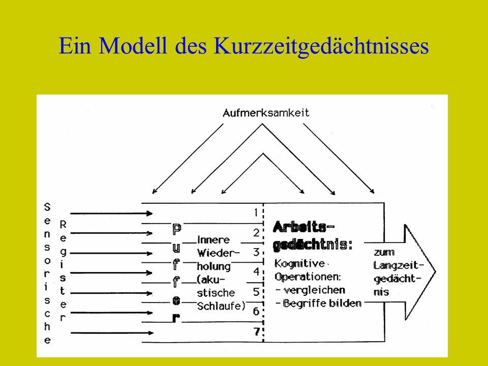 Ein Modell des Kurzzeitgedächtnisses