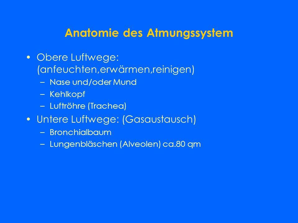 Anatomie des Atmungssystem