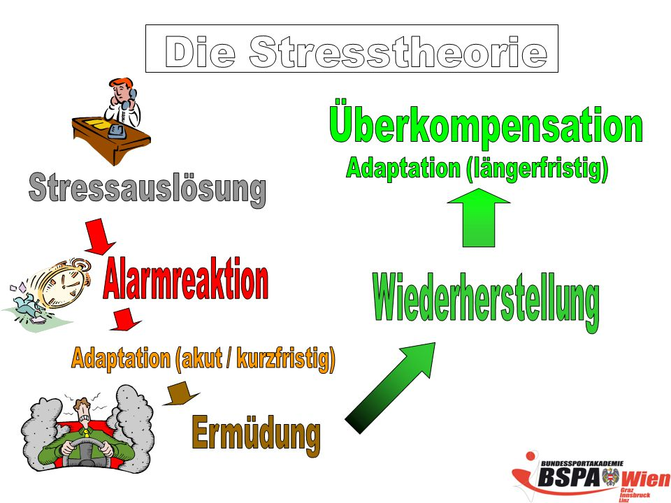 Adaptation (längerfristig) Adaptation (akut / kurzfristig)