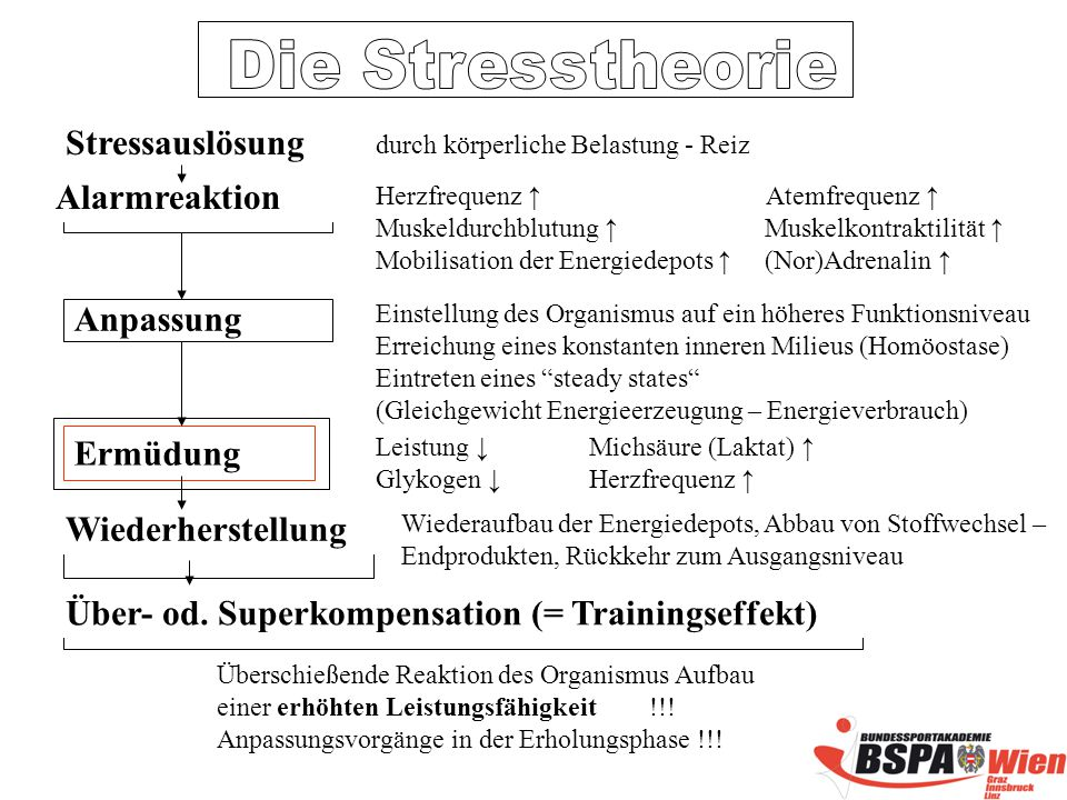 Über- od. Superkompensation (= Trainingseffekt)
