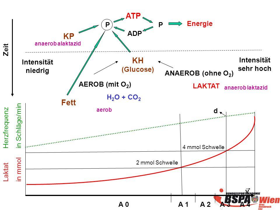ATP KP KH (Glucose) Fett P P Energie ADP Zeit Intensität sehr hoch