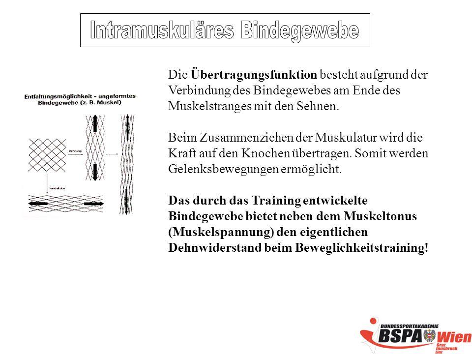 Intramuskuläres Bindegewebe