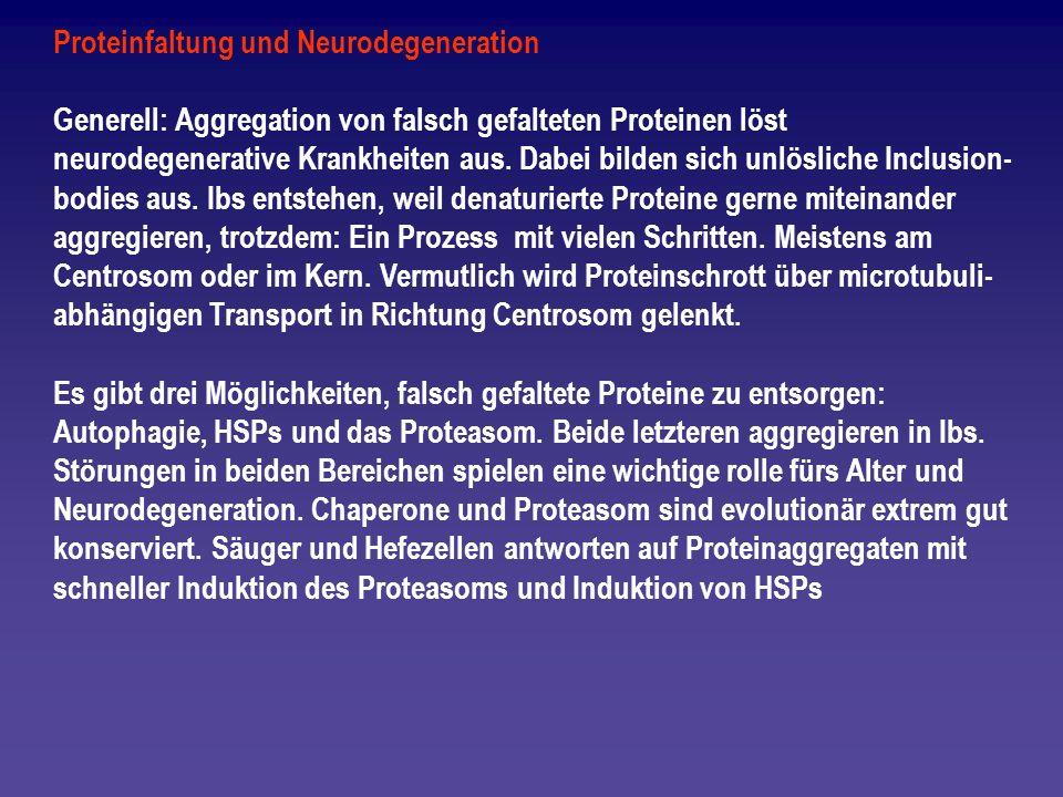 Proteinfaltung und Neurodegeneration