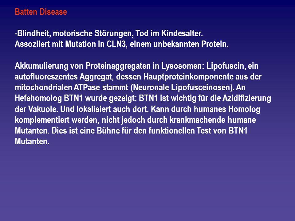 Batten Disease -Blindheit, motorische Störungen, Tod im Kindesalter. Assoziiert mit Mutation in CLN3, einem unbekannten Protein.