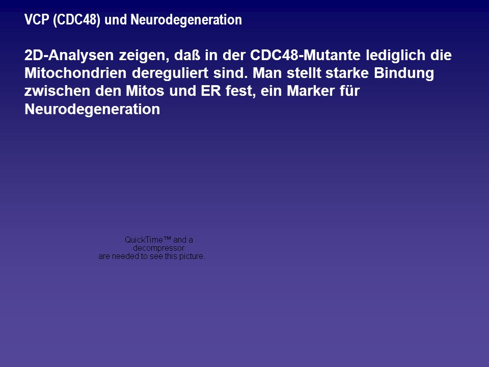 VCP (CDC48) und Neurodegeneration