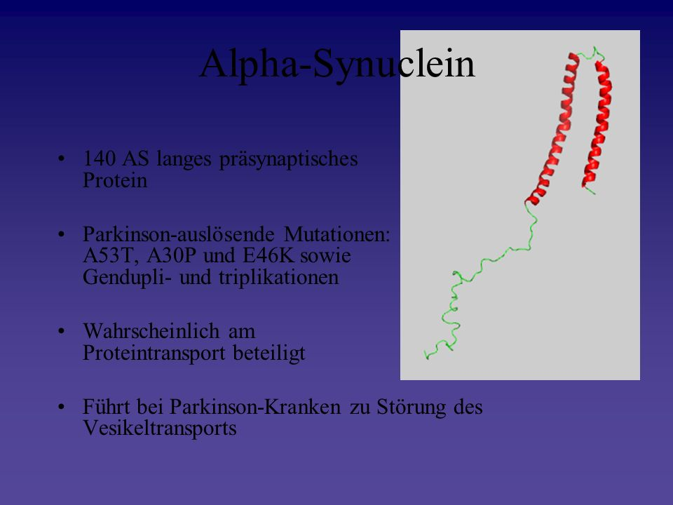 Alpha-Synuclein 140 AS langes präsynaptisches Protein