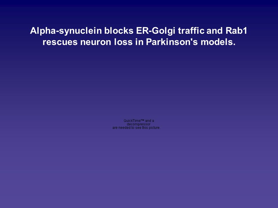 Alpha-synuclein blocks ER-Golgi traffic and Rab1 rescues neuron loss in Parkinson s models.