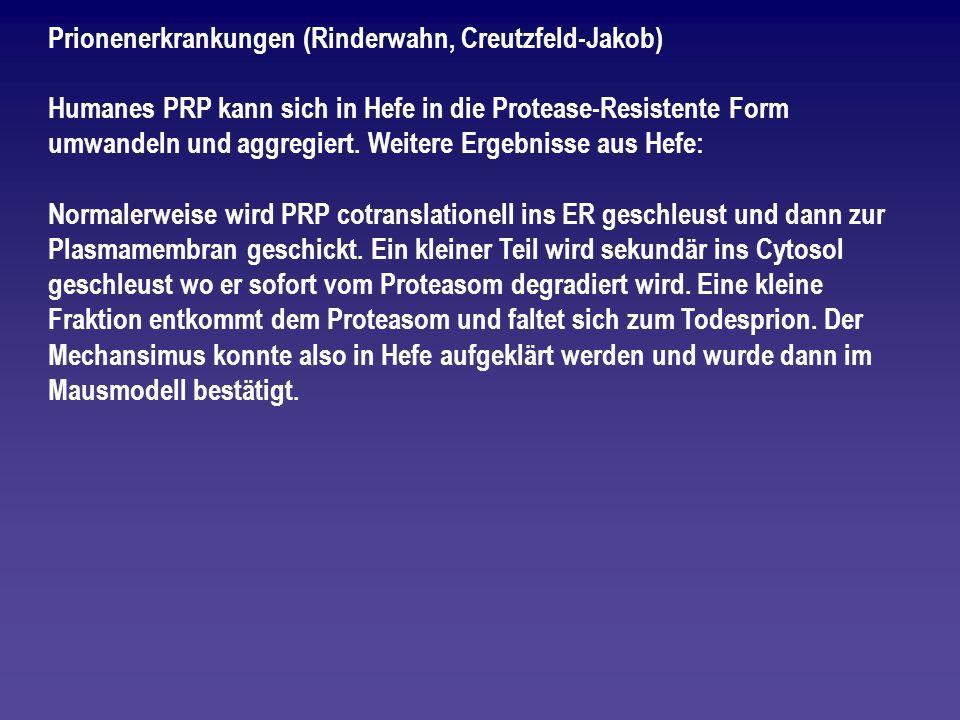 Prionenerkrankungen (Rinderwahn, Creutzfeld-Jakob)