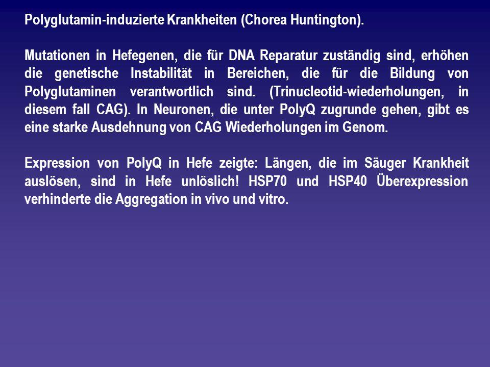 Polyglutamin-induzierte Krankheiten (Chorea Huntington).
