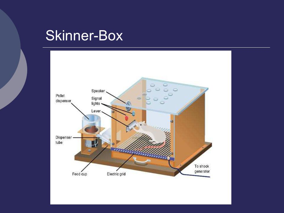 Skinners theory on Operant Conditioning  Psychestudy