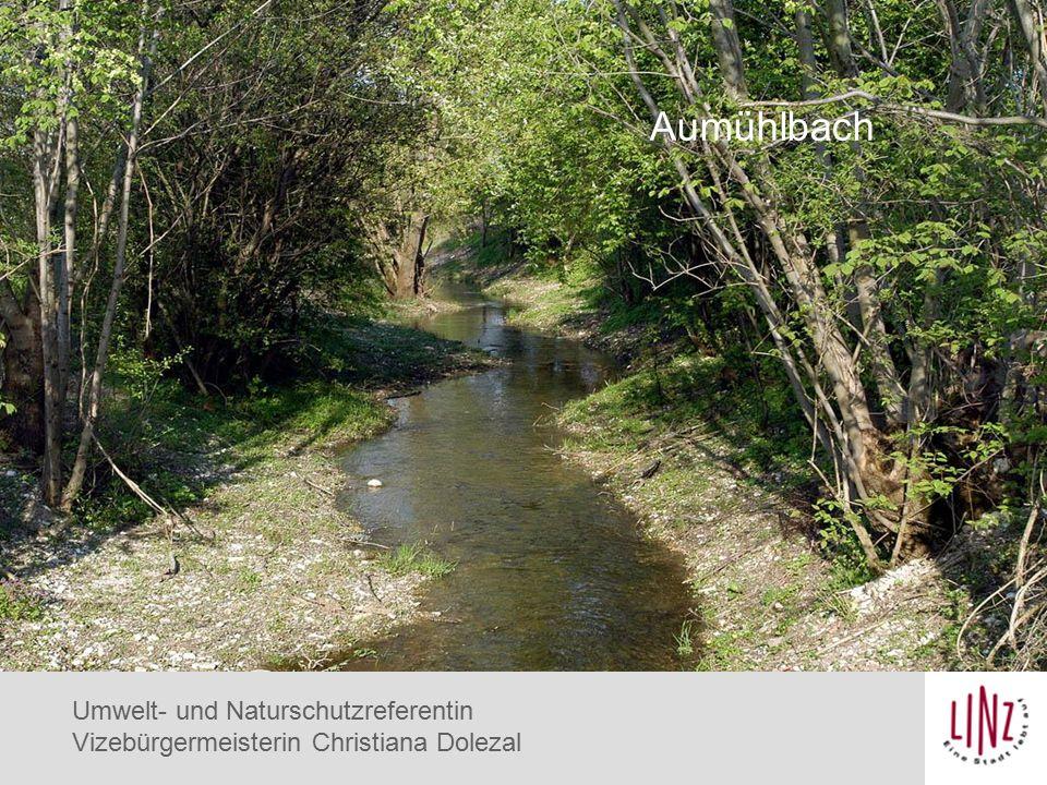 Eisvogel Aumühlbach Umwelt- und Naturschutzreferentin Vizebürgermeisterin Christiana Dolezal