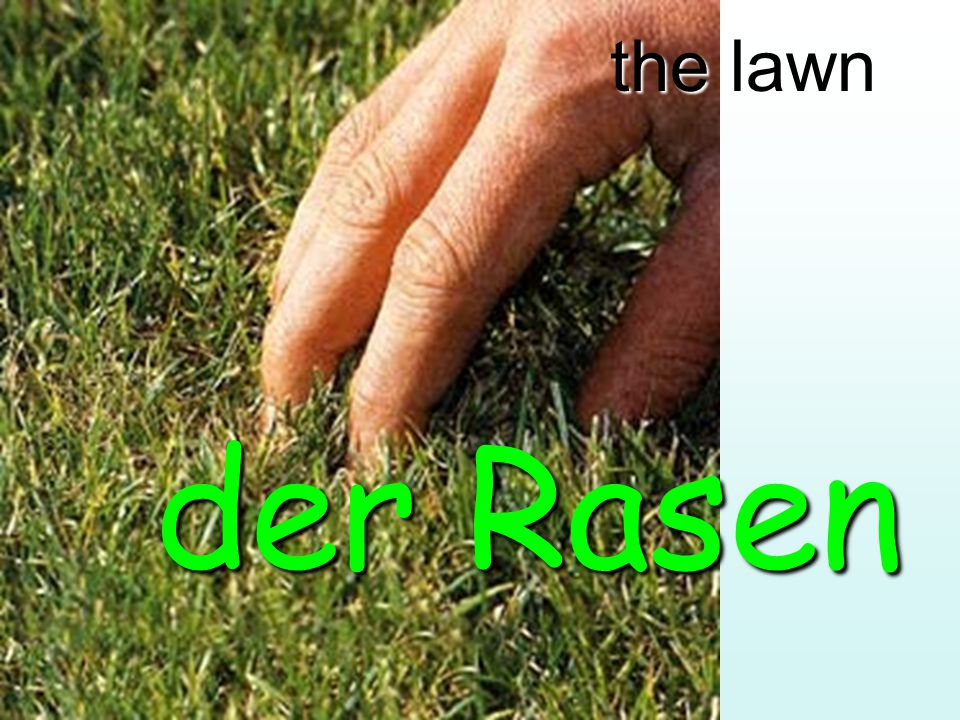 the lawn der Rasen