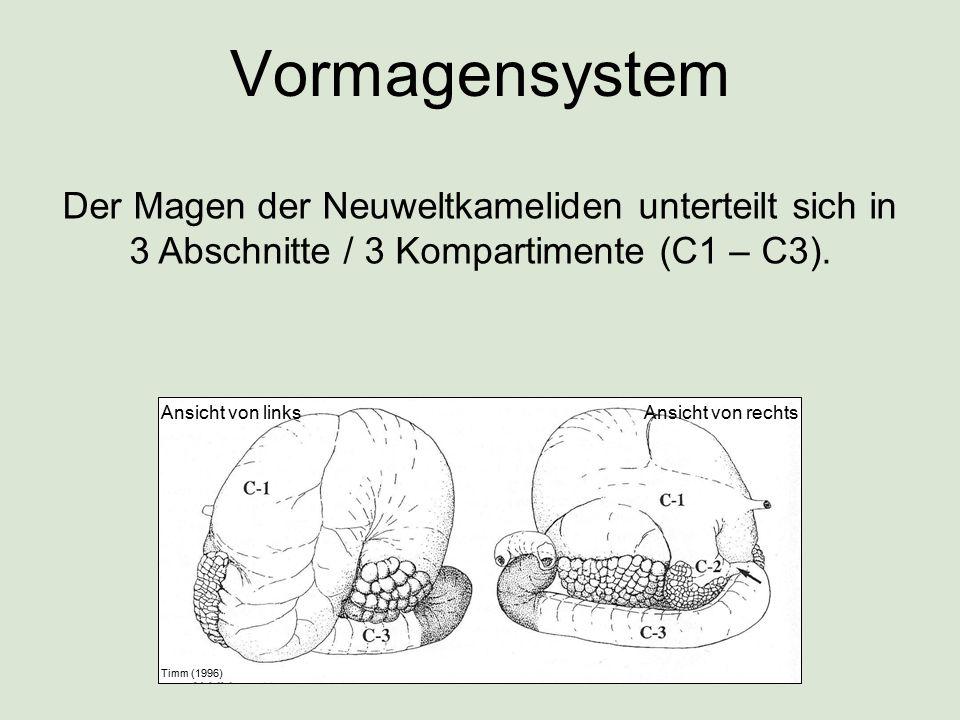 Vormagensystem Der Magen der Neuweltkameliden unterteilt sich in 3 Abschnitte / 3 Kompartimente (C1 – C3).