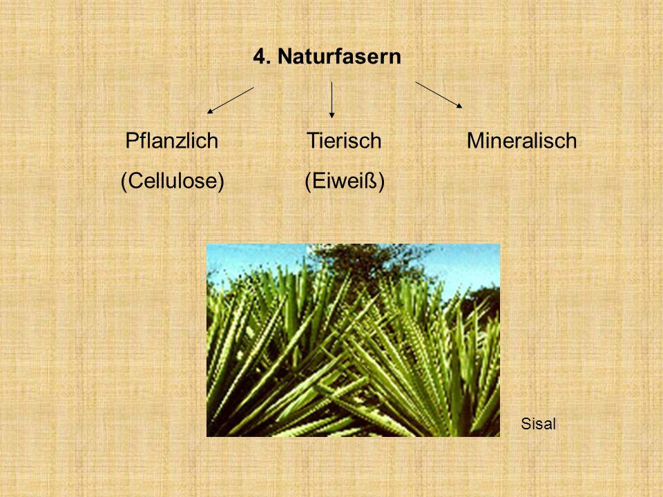 4. Naturfasern Pflanzlich (Cellulose) Tierisch (Eiweiß) Mineralisch