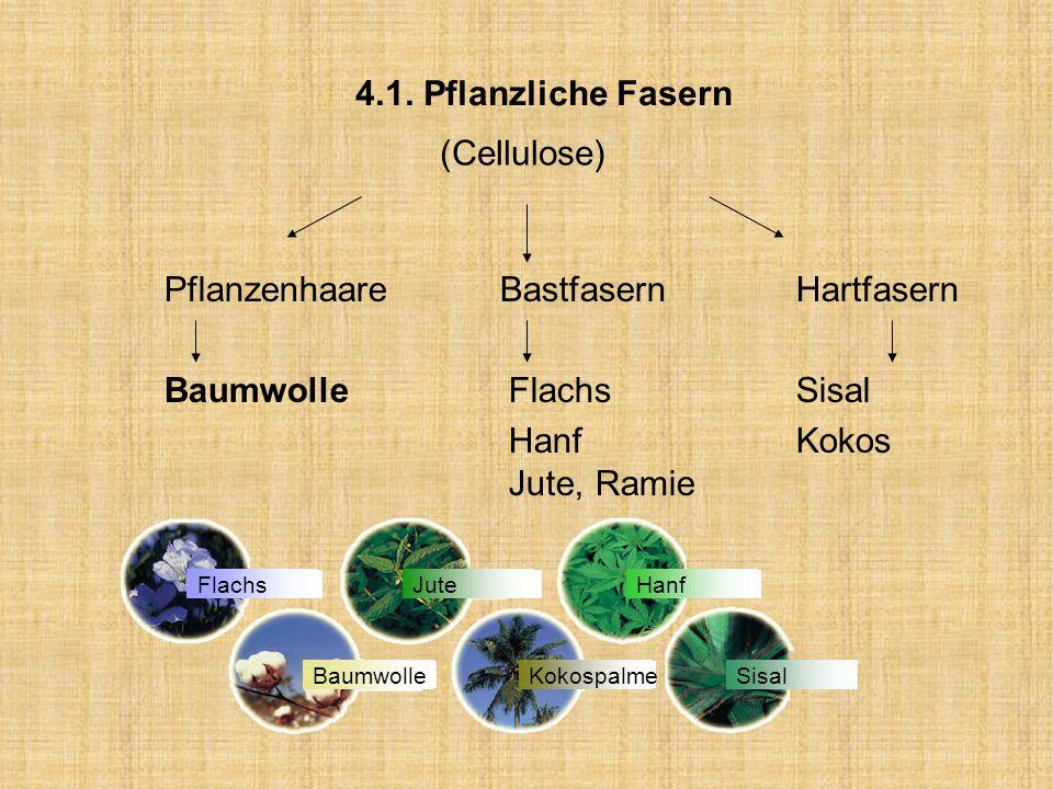 Pflanzenhaare Bastfasern Hartfasern Baumwolle Flachs Sisal