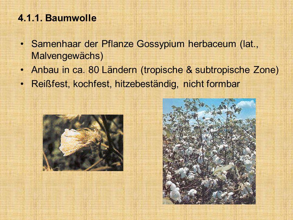 4.1.1. Baumwolle Samenhaar der Pflanze Gossypium herbaceum (lat., Malvengewächs) Anbau in ca. 80 Ländern (tropische & subtropische Zone)