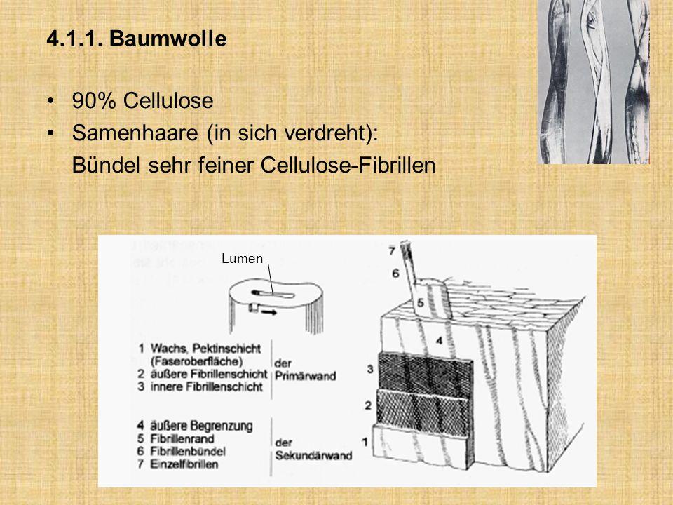 Samenhaare (in sich verdreht): Bündel sehr feiner Cellulose-Fibrillen