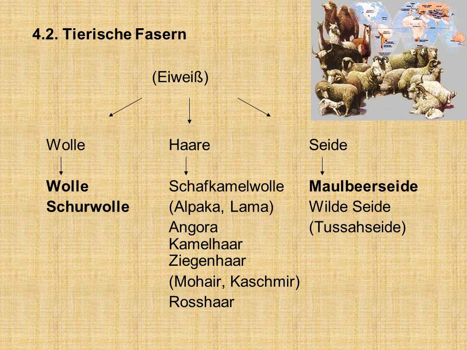 4.2. Tierische Fasern (Eiweiß) Wolle Haare Seide. Wolle Schafkamelwolle Maulbeerseide. Schurwolle (Alpaka, Lama) Wilde Seide.