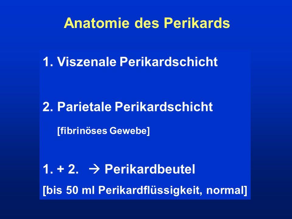 Anatomie des Perikards
