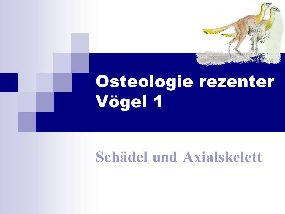 Osteologie rezenter Vögel 1