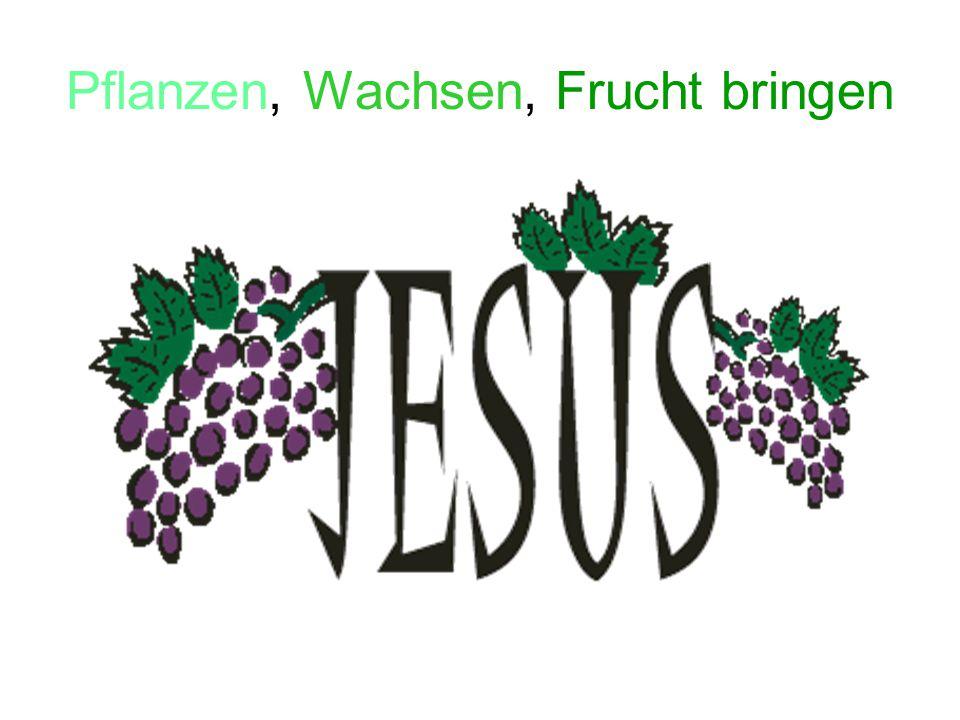 Pflanzen, Wachsen, Frucht bringen