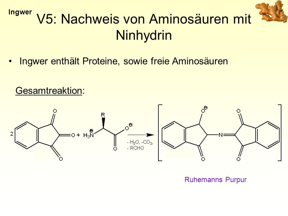V5: Nachweis von Aminosäuren mit Ninhydrin