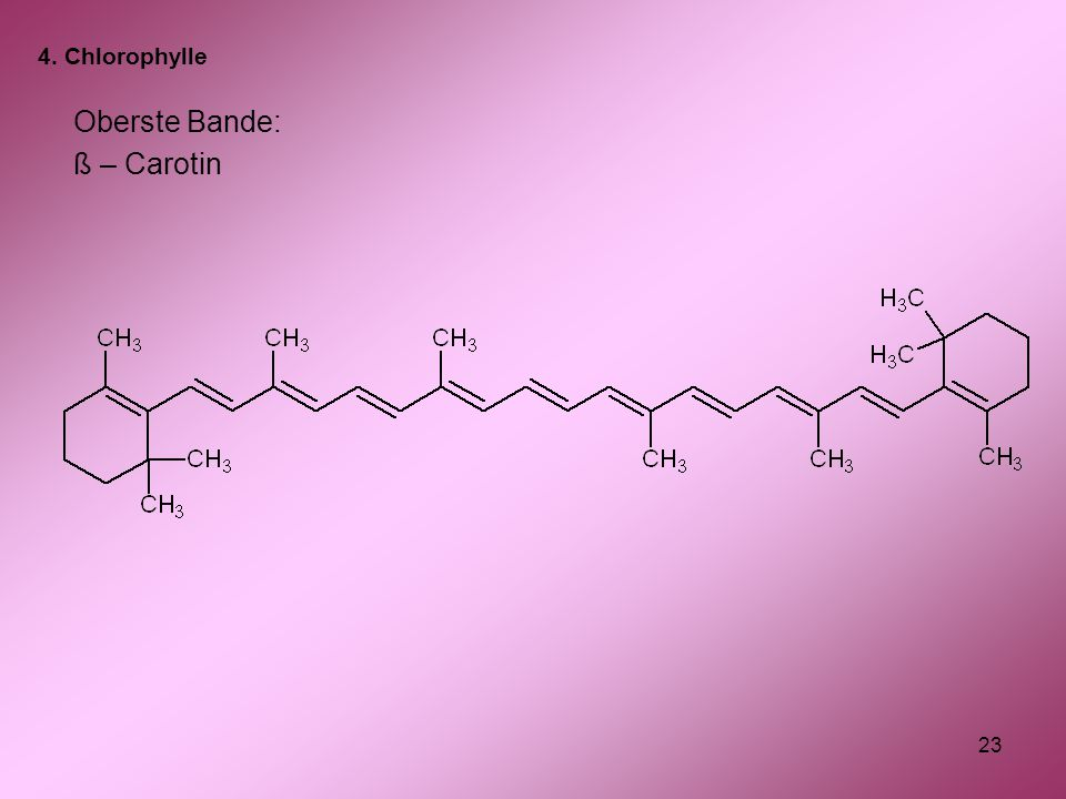 4. Chlorophylle Oberste Bande: ß – Carotin