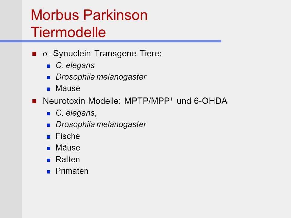 Morbus Parkinson Tiermodelle
