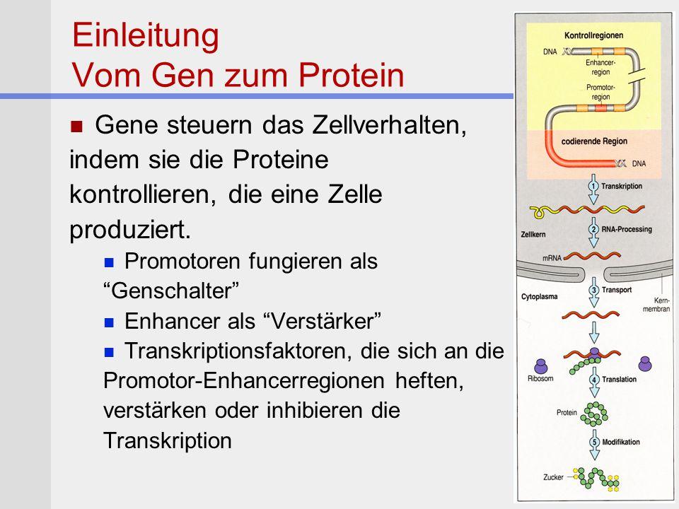 Einleitung Vom Gen zum Protein