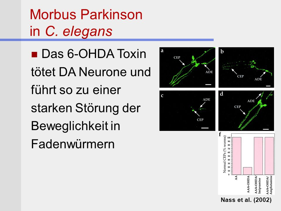 Morbus Parkinson in C. elegans