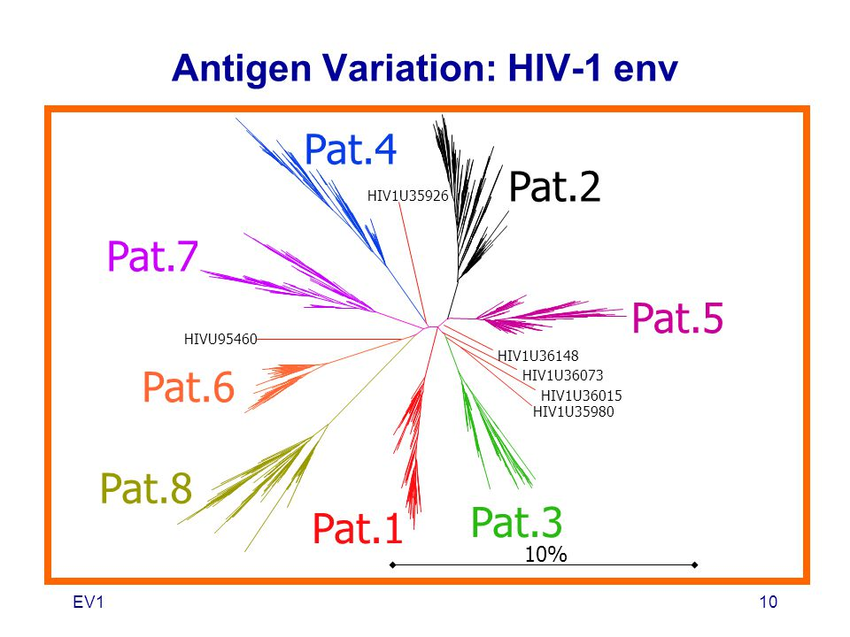 Antigen Variation: HIV-1 env
