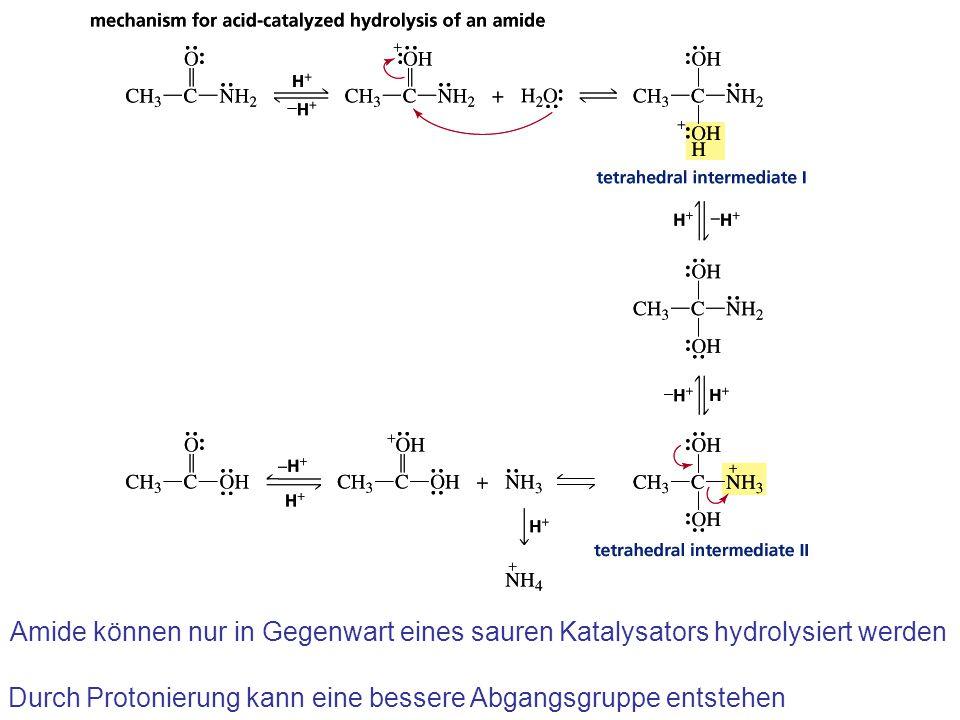 Amide können nur in Gegenwart eines sauren Katalysators hydrolysiert werden