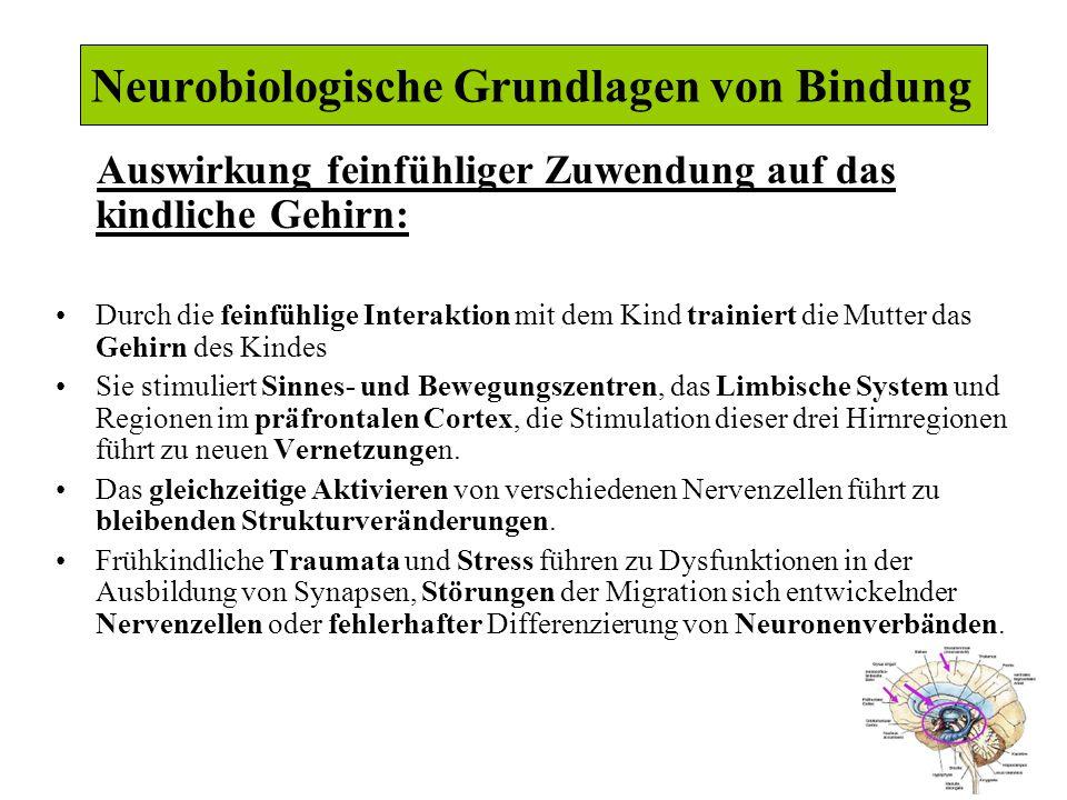 Neurobiologische Grundlagen von Bindung