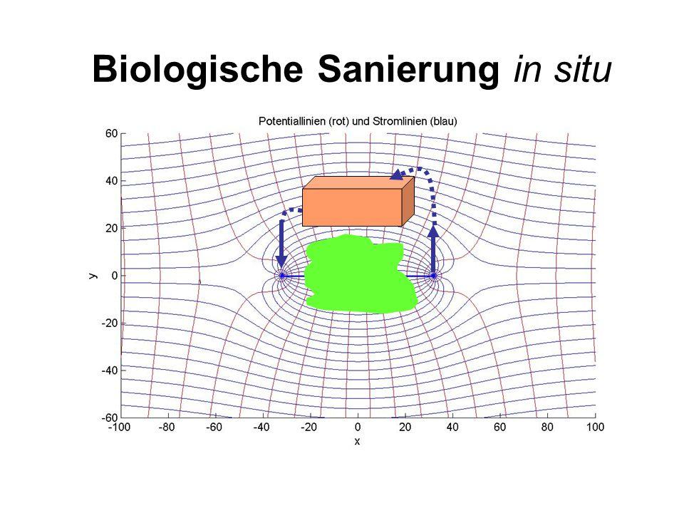 Biologische Sanierung in situ