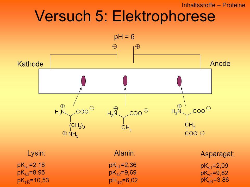 Versuch 5: Elektrophorese