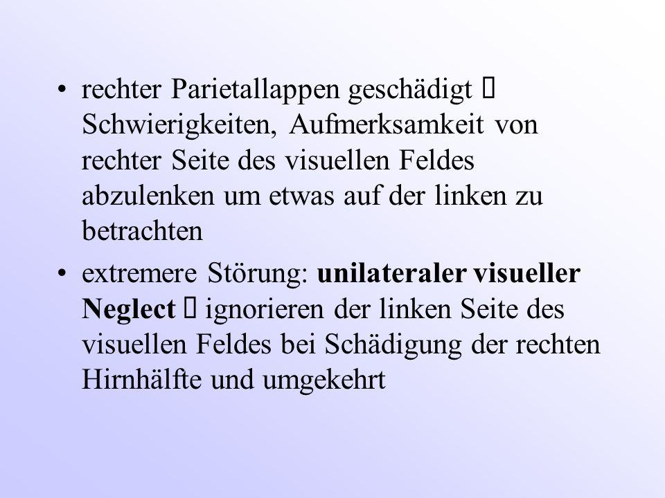 rechter Parietallappen geschädigt ð Schwierigkeiten, Aufmerksamkeit von rechter Seite des visuellen Feldes abzulenken um etwas auf der linken zu betrachten