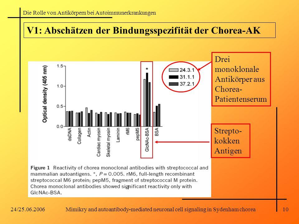 V1: Abschätzen der Bindungsspezifität der Chorea-AK