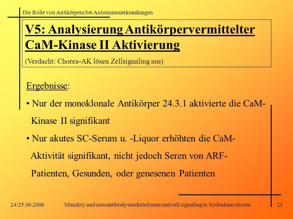 V5: Analysierung Antikörpervermittelter CaM-Kinase II Aktivierung