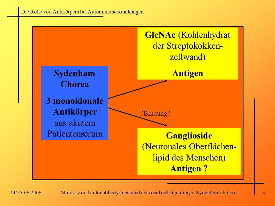 Sydenham Chorea Antigen