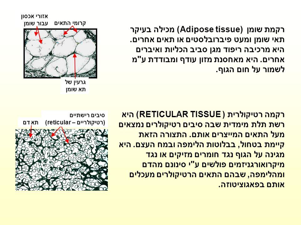 קרומי התאים אזורי אכסון עבור שומן. גרעין של תא שומן.