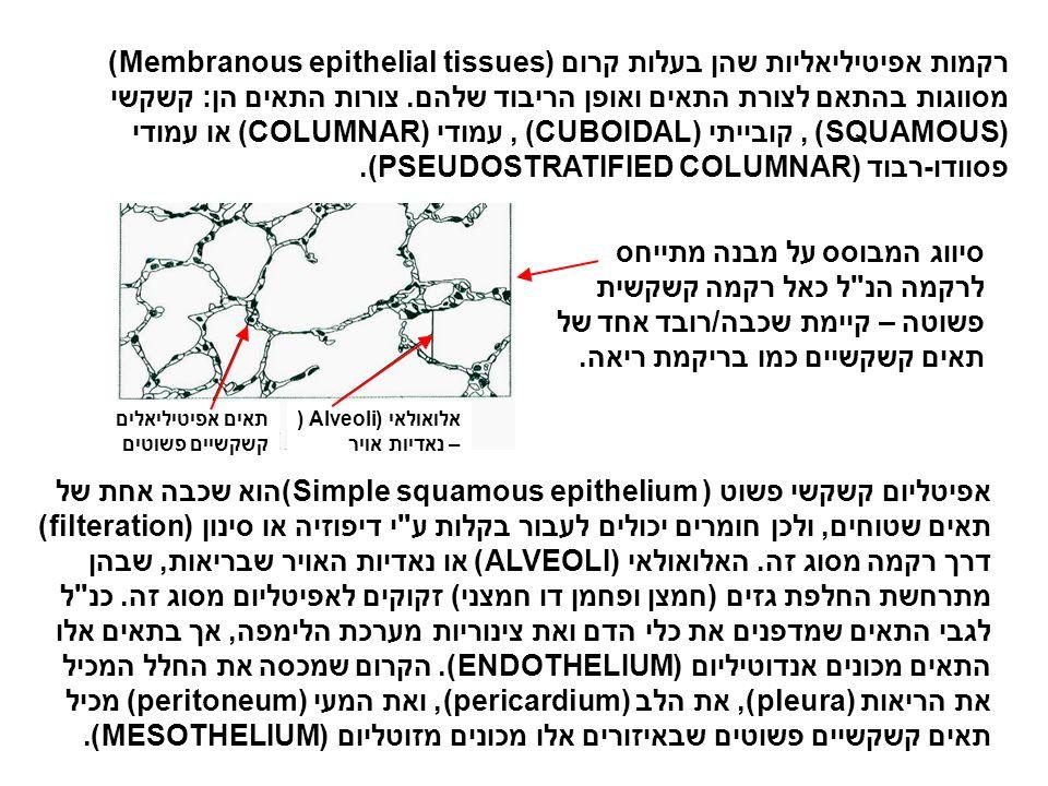 רקמות אפיטיליאליות שהן בעלות קרום (Membranous epithelial tissues) מסווגות בהתאם לצורת התאים ואופן הריבוד שלהם. צורות התאים הן: קשקשי (SQUAMOUS) , קובייתי (CUBOIDAL) , עמודי (COLUMNAR) או עמודי פסוודו-רבוד (PSEUDOSTRATIFIED COLUMNAR).