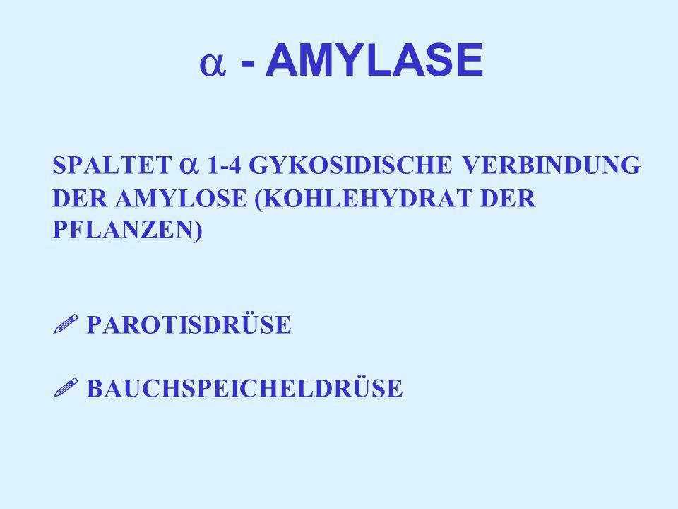  - AMYLASE SPALTET  1-4 GYKOSIDISCHE VERBINDUNG DER AMYLOSE (KOHLEHYDRAT DER PFLANZEN)  PAROTISDRÜSE  BAUCHSPEICHELDRÜSE.