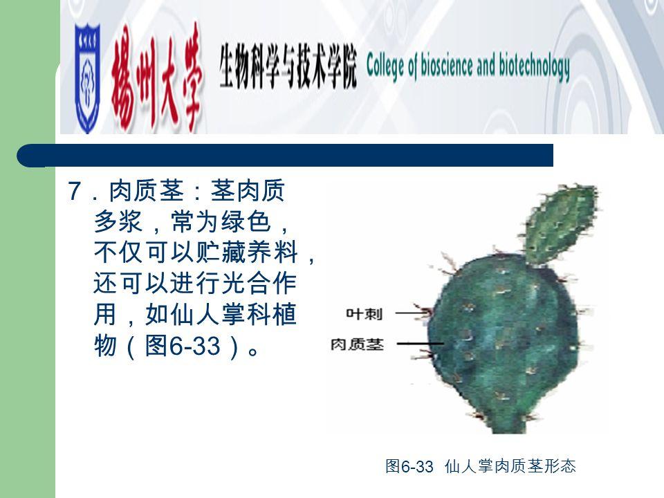 7.肉质茎:茎肉质多浆,常为绿色,不仅可以贮藏养料,还可以进行光合作用,如仙人掌科植物(图6-33)。